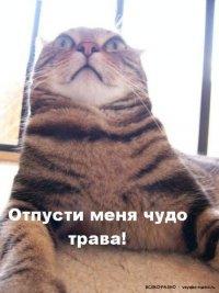 Водимир Олійник, 25 июля 1996, Ростов-на-Дону, id15216682
