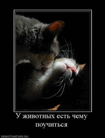 http://cs1508.vk.me/u2005119/100648512/x_3b9a8032.jpg