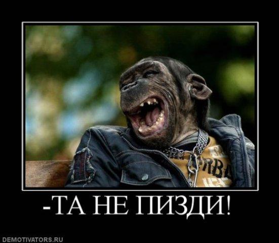 http://cs1530.vkontakte.ru/u22304224/97818679/x_73197cf3.jpg