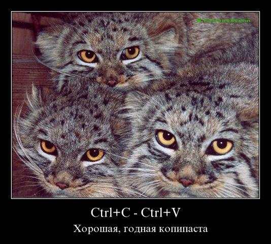 И снова о наших любимцах))