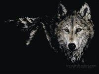 Wolf Yakoubovich, Rennes