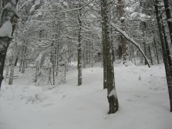 http://cs1571.vkontakte.ru/u3839970/53385596/x_8e2cd1fe.jpg
