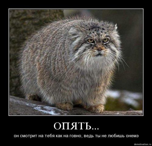 http://cs1579.vkontakte.ru/u26312361/68673722/x_6bb20e87.jpg