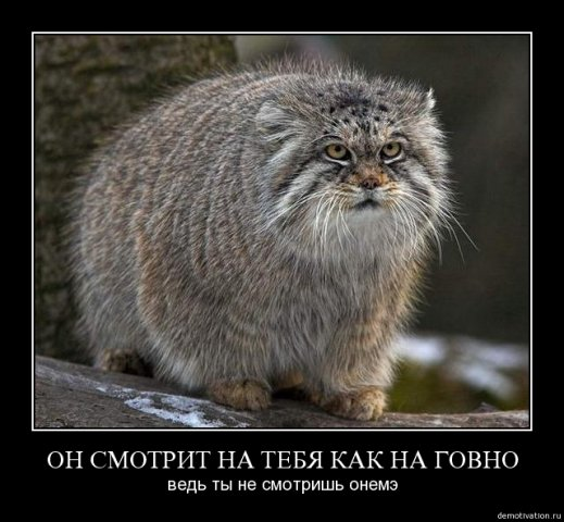 http://cs1579.vkontakte.ru/u26312361/68673722/x_b3cc19e8.jpg