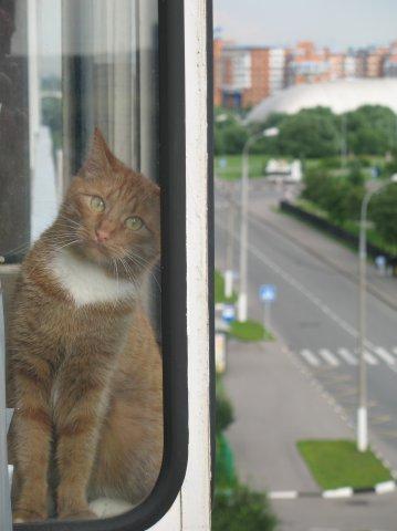 http://cs1579.vkontakte.ru/u3191725/16627804/x_ce5d1645.jpg