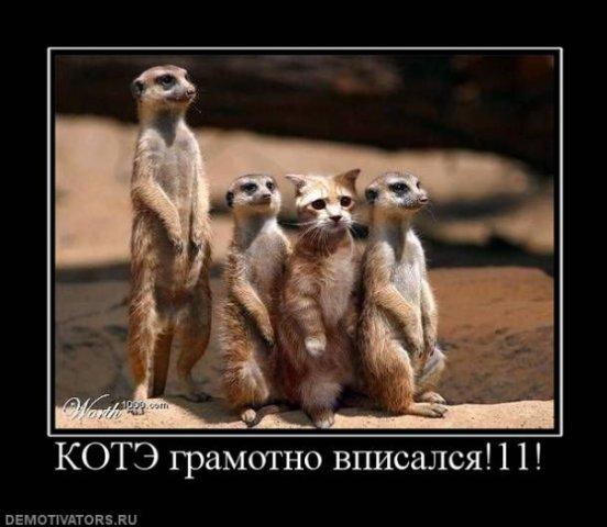 http://cs1580.vkontakte.ru/u1686441/99344096/x_89dd66ef.jpg