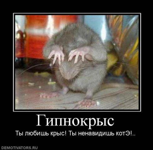 http://cs1580.vkontakte.ru/u1686441/99344096/x_c860076c.jpg
