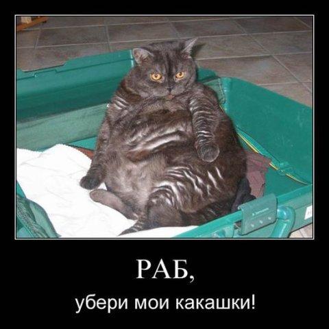 http://cs1580.vkontakte.ru/u1686441/99344096/x_e4ec9182.jpg