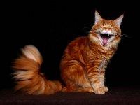 Котёнок Ммуууурррр