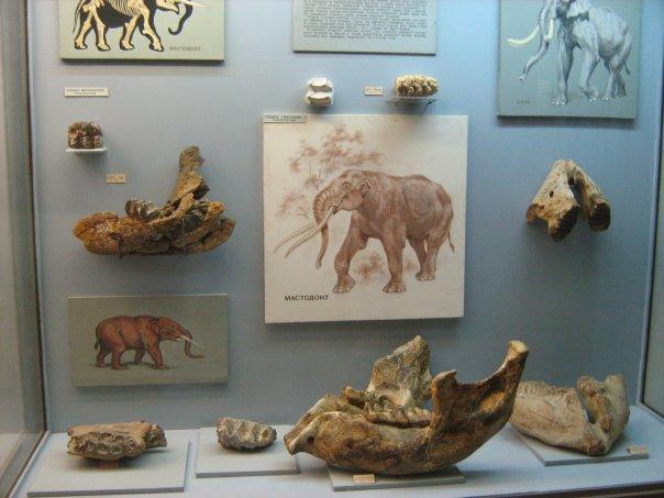 Мои путешествия. Елена Руденко. Киев (Научно-природоведческий музей.  ). 2009г. X_1aad47fe