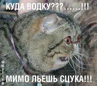 Хз Хз, Степанакерт