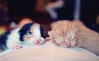 Смешные фотографии кошечек - вторая страница.