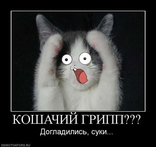 http://cs1675.vkontakte.ru/u8676372/97899810/x_279d21c7.jpg