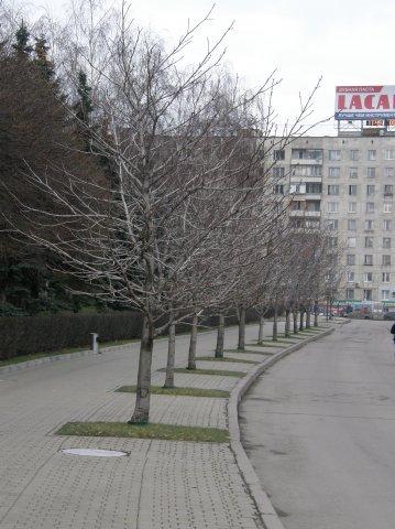 http://cs1774.vkontakte.ru/u7243842/58951988/x_7f766da9.jpg