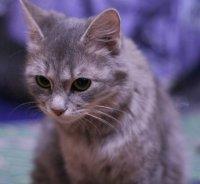 Маня Кошка