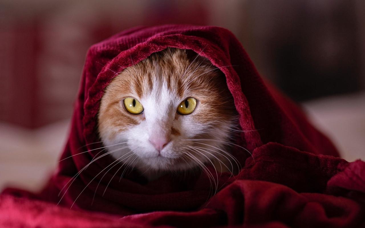 Настроение: свить гнездо из одеяла и никогда оттуда не выходить