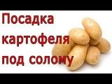 Посадка картофеля под солому Огород без хлопот