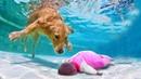 Собака Герой Спасает Жизнь Ребенку 10 Невероятных Случаев Снятых На Камеру