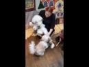 Собачку Моську лохматые персики приняли за живую!