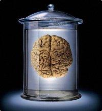 Мозг Diablo