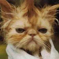 Тупые картинки котов