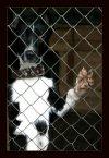 Прояви сострадание  и убей в себе равнодушие... несчастным животным осталось 5 дней...
