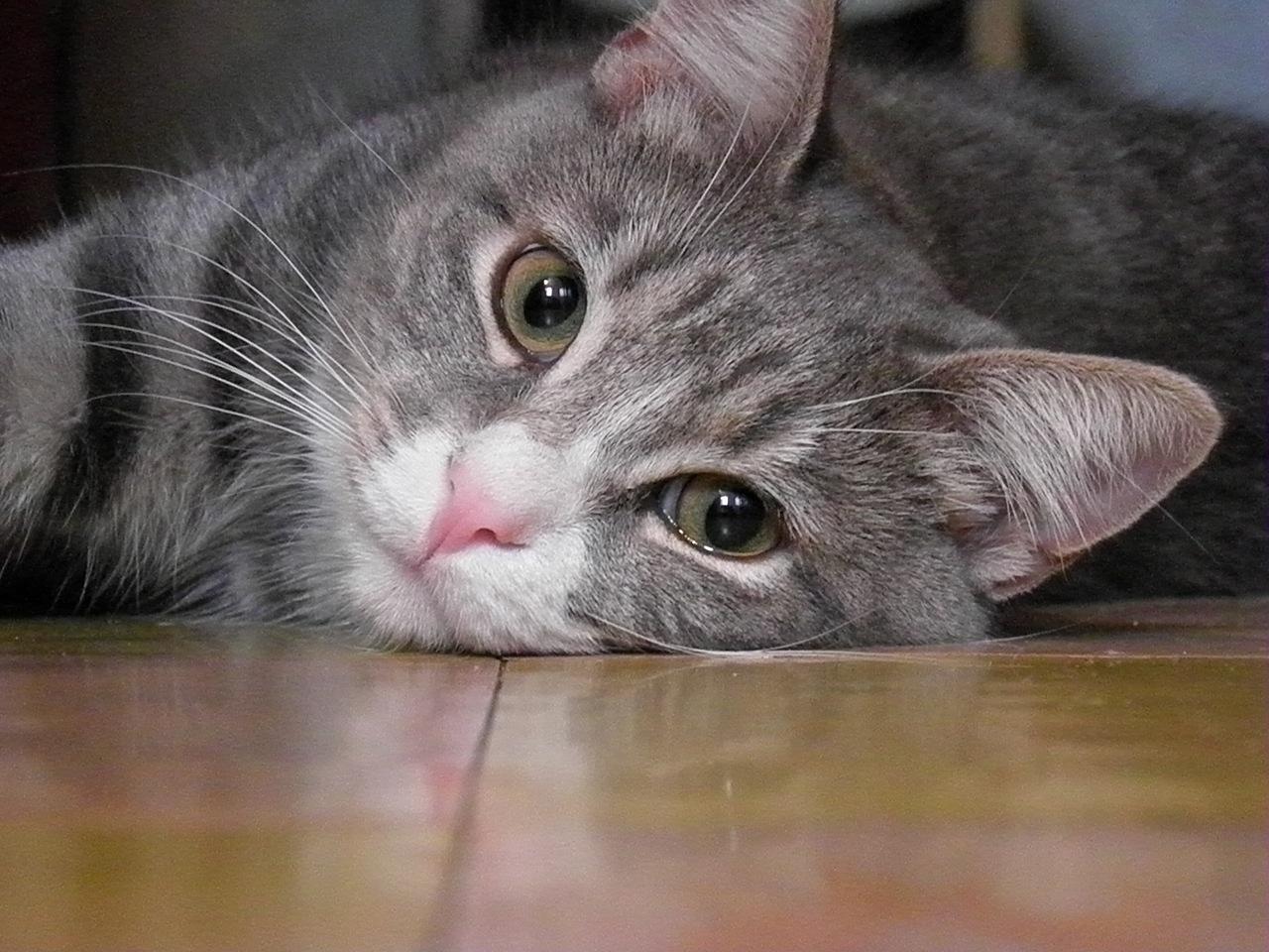 Жара и кошки - помогаем кошкам пережить жару