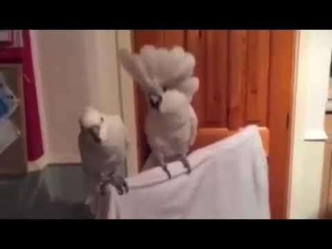 Крутой папугай.Посмотрите не пожалеете