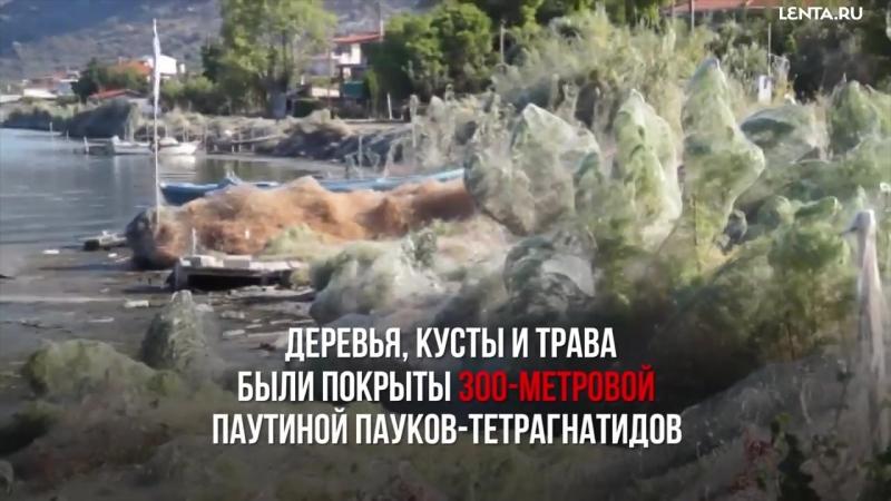 Паутина в Греции