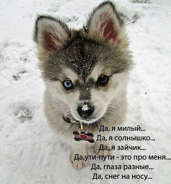 http://cs301104.vk.me/v301104979/48dd/PJvdraYGbUY.jpg