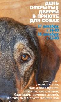 Работа Приют для животных в Ступино, поиск вакансий