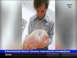 Рыба-капля стала талисманом «Общества защиты уродливых животных»