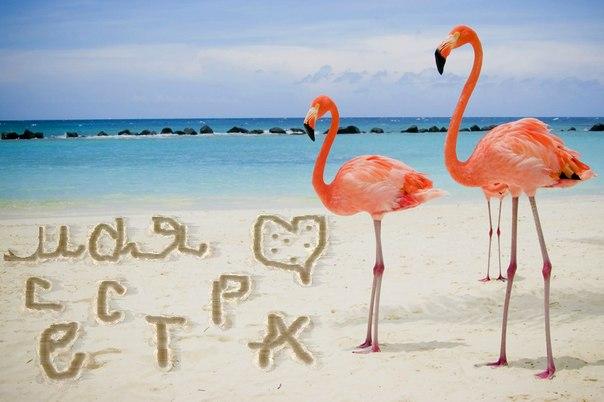 Животные, Птицы, Розовый фламинго на берегу.