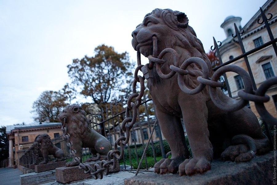 29 львов в Петербурге