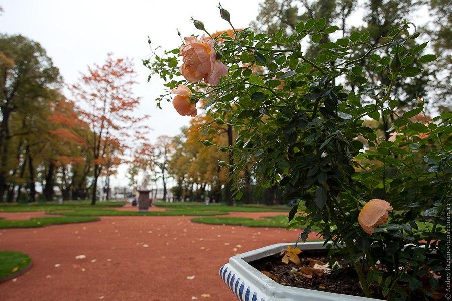 Летний сад осенью