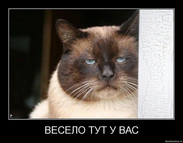 Кроме сайт гснв продажа трешек м.тимирязевская самоуверенно считает, что