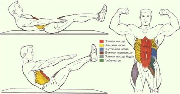 Анатомия и схемы упражнений ч.2.
