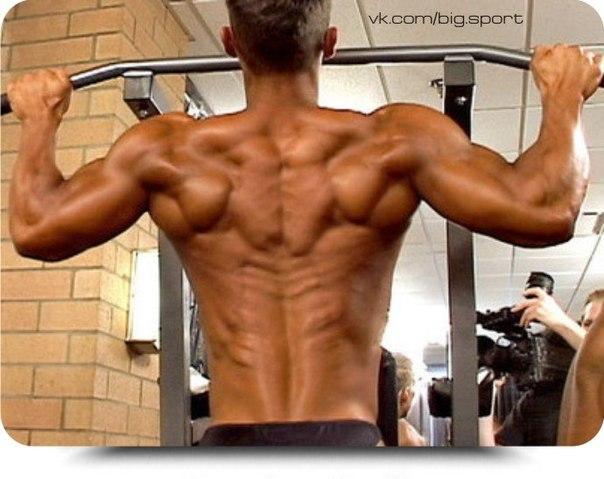 Как накачать спину. как накачать бицепс, упражнения на бицепс. kak nakachat