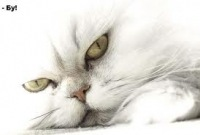 Уродливые коты (46 фото).