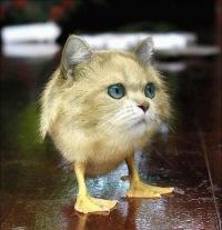 Смешные фотографии с котом