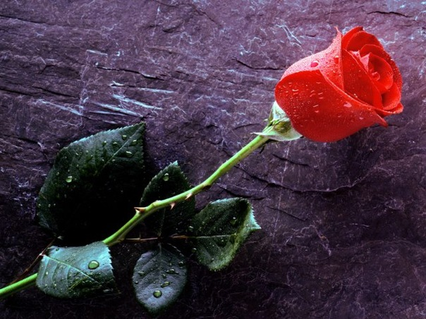 Offre une fleur  - Page 2 X_7c834683
