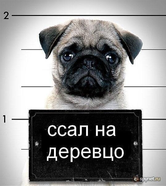 В Виннице на 60 суток арестовали активиста Юрия Павленко, порвавшего портрет Порошенко - Цензор.НЕТ 5298