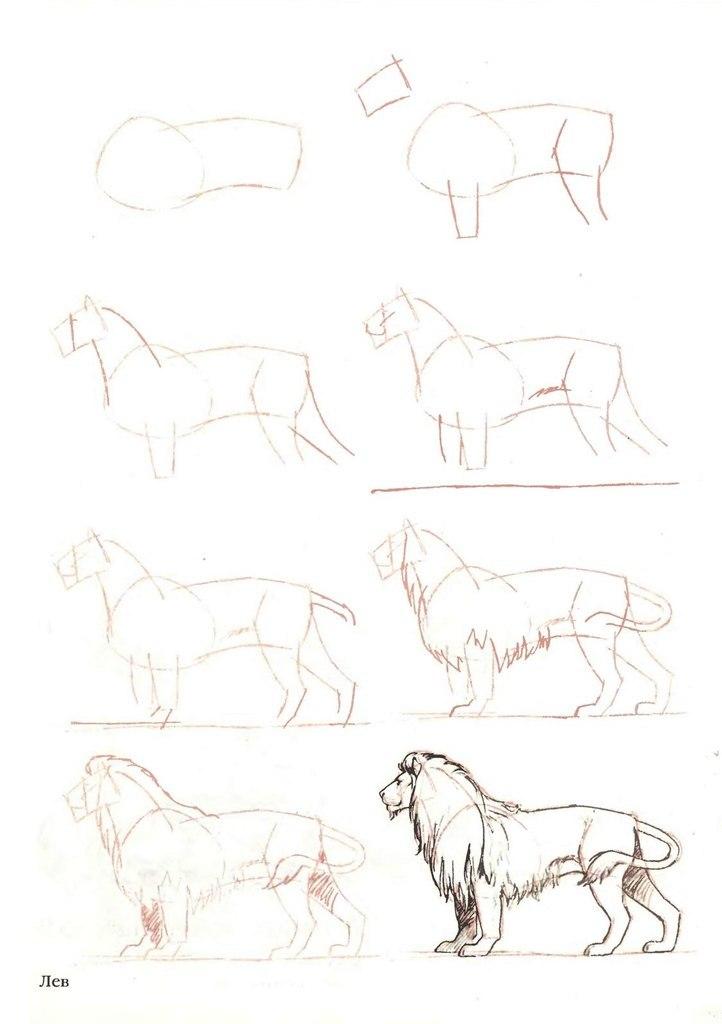 В конце урока будет два видео по реалистичному рисованию головы льва.