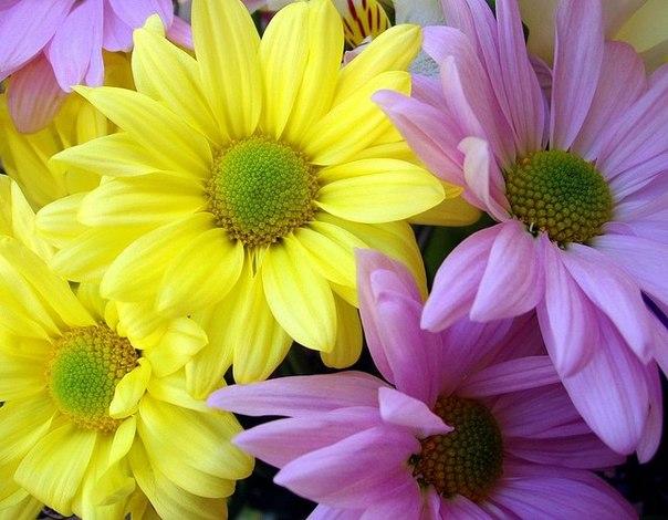 картинки цветы маслом: