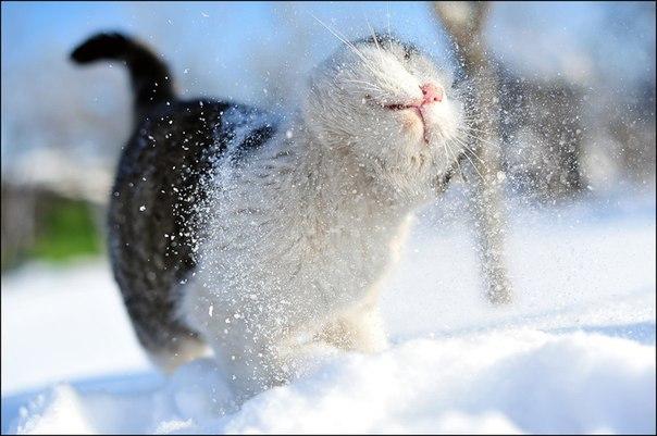 мэйкун кошка википедия.