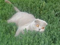 Natasha-D-Ze Felix, 24 мая 1989, Нижний Новгород, id65946954