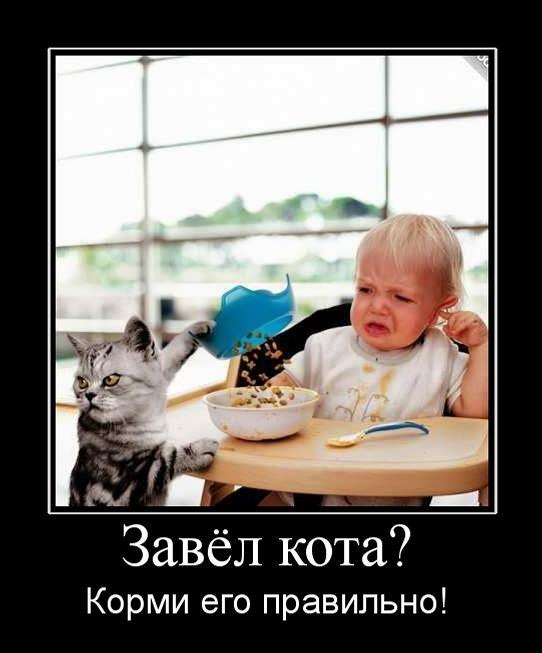 Завёл кота, корми его правильно