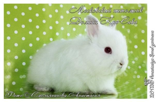 http://cs301509.userapi.com/v301509077/162a/Ua5D-BkXiCc.jpg