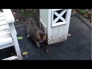 Котейка бегает за мышкой Cat runs after the mouse