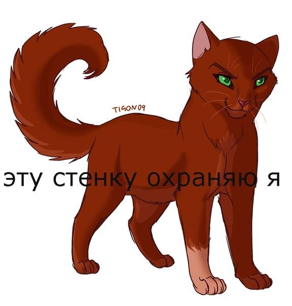 Фото кошки на аву стим - 194c9